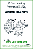 Autumn Juveniles