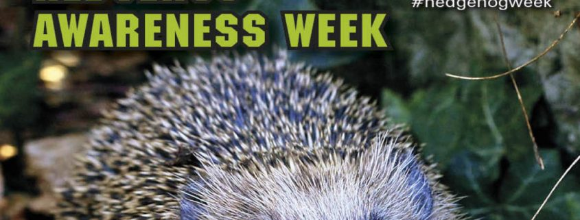 Hedgehog Awareness Week 2017