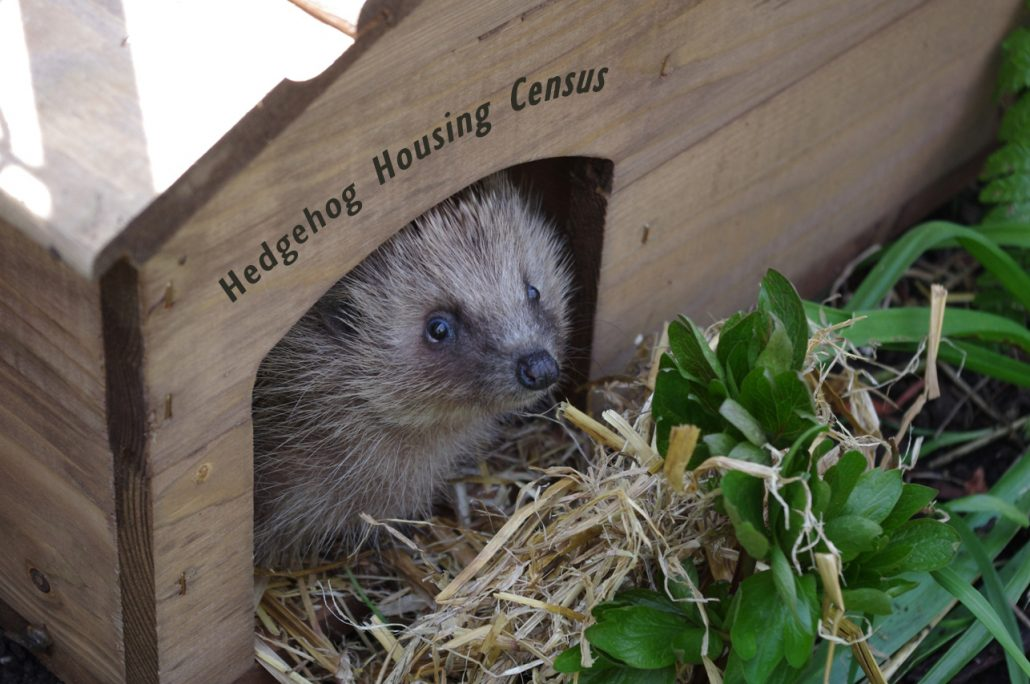 Hedgehog Housing Census