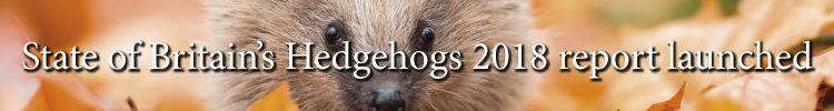 State of British Hedgehogs Report 2018